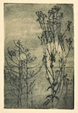 FRANCESCO ARATA, Landscape with Plants, etching