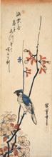 HIROSHIGE, Oriole on Aronia Branch, woodcut
