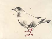 ALBERTO MANFREDI, A dove, black chalk and watercolor