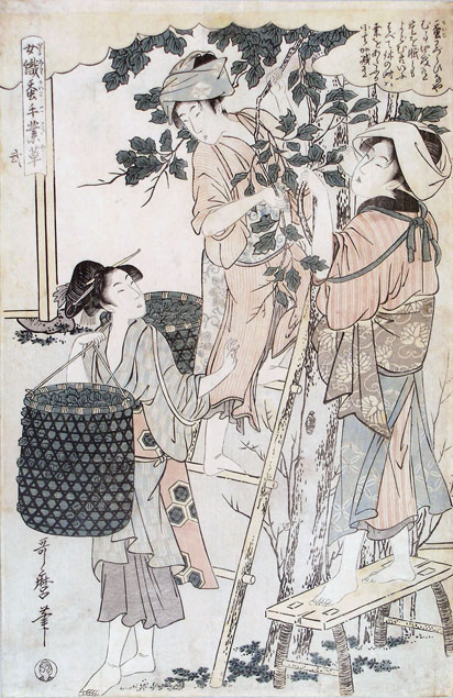 Utamaro, women picking mulberry leaves