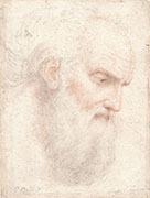 BEARDED VIRILE HEAD, TURNED TOWARDS THE RIGHT (Inspired by Perugino)